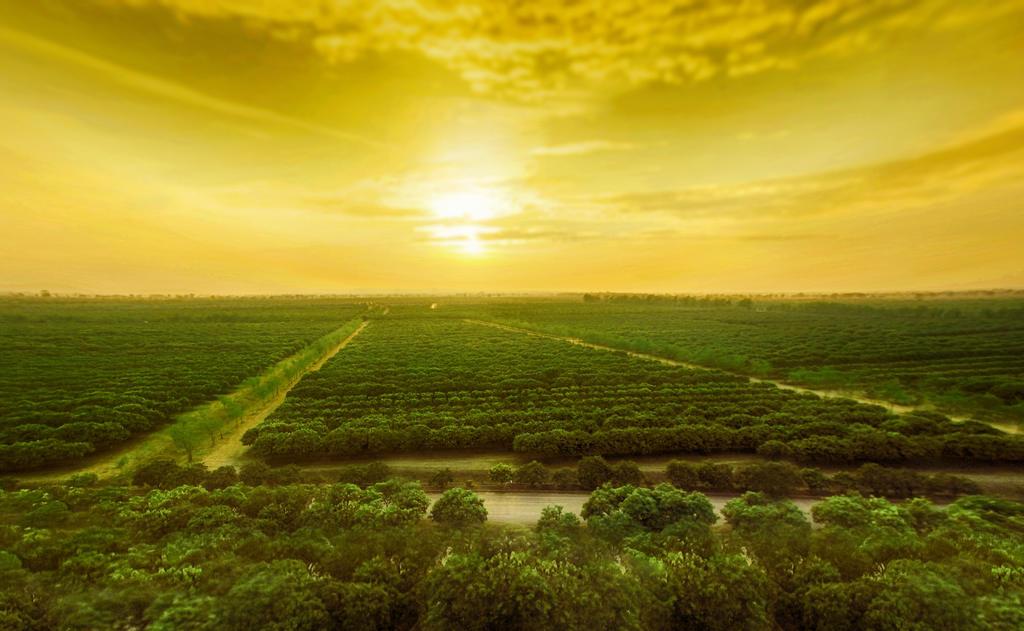 Sky, Nature, Natural landscape, Green, Horizon, Plain, Grassland, Natural environment, Morning, Sunlight, Light, Field, Sunrise, Landscape, Sunset, Ecoregion, Hill, Rural area, Cloud, Prairie