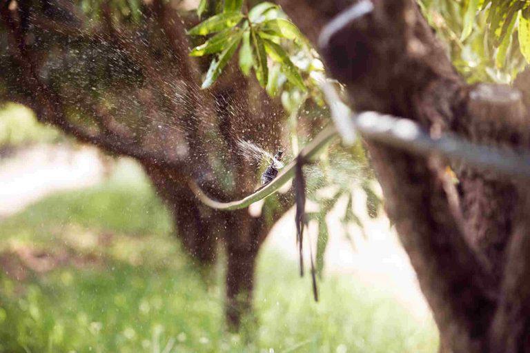 Tree, Nature